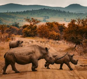 A herd of rhinos in an African landscape